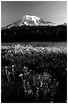 Summer wildflowers, Lake, and Mt Rainier, sunrise. Mount Rainier National Park ( black and white)