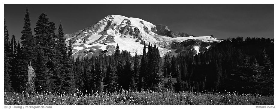 Flowers, trees, and snow-covered mountain. Mount Rainier National Park (black and white)