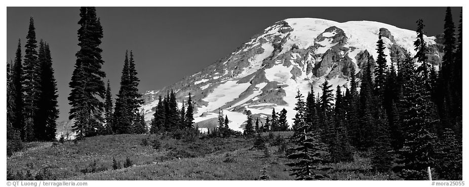 Meaadows and Mount Rainier. Mount Rainier National Park (black and white)