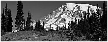 Meaadows and Mount Rainier. Mount Rainier National Park (Panoramic black and white)