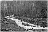 Tahoma Creek, Westside. Mount Rainier National Park ( black and white)