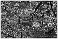 Autumn foliage in rainforest. Mount Rainier National Park ( black and white)