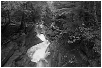 Water rushes down Van Trump Creek. Mount Rainier National Park, Washington, USA. (black and white)