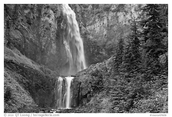 Forest and waterfall. Mount Rainier National Park (black and white)