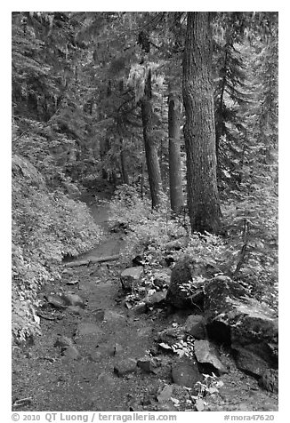 Comet Falls trail. Mount Rainier National Park (black and white)