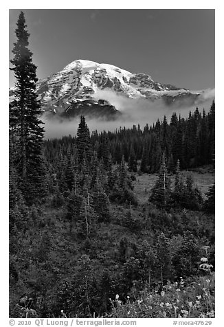 Conifer forest, meadows, and Mt Rainier viewed from below Paradise. Mount Rainier National Park (black and white)