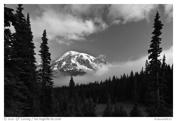 Conifers, clouds, and Mount Rainier. Mount Rainier National Park (black and white)