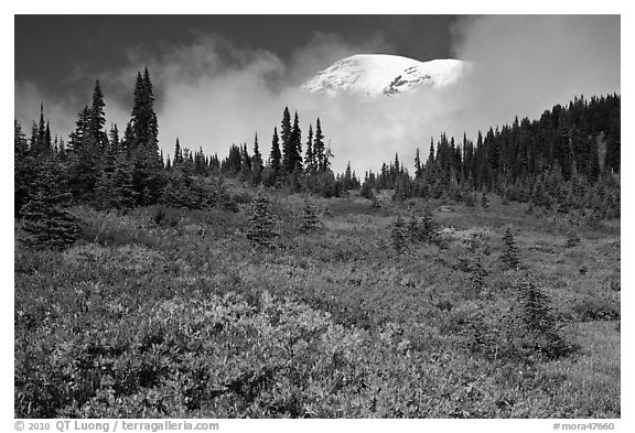 Mount Rainier emerging above clouds and meadows in autumn. Mount Rainier National Park (black and white)