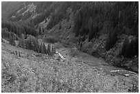 Stevens Canyon in autumn. Mount Rainier National Park, Washington, USA. (black and white)