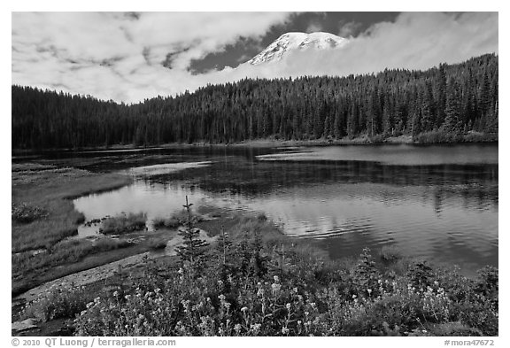 Mount Rainier from Reflection lakes in autumn. Mount Rainier National Park (black and white)