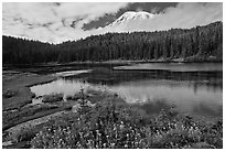 Mount Rainier from Reflection lakes in autumn. Mount Rainier National Park ( black and white)
