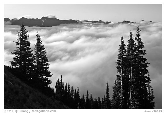 Sea of clouds and Governors Ridge, early morning. Mount Rainier National Park (black and white)