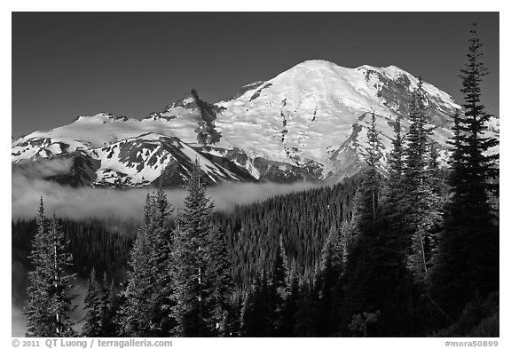 Mount Rainier from Sunrise. Mount Rainier National Park (black and white)