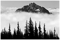 Spruce trees and Goat Island Mountain emerging from clouds. Mount Rainier National Park, Washington, USA. (black and white)