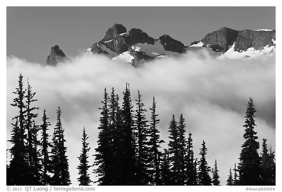 Trees, fog, and ridge, Sunrise. Mount Rainier National Park (black and white)