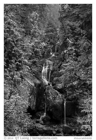 Multi-tiered waterfall in old-growth forest. Mount Rainier National Park (black and white)