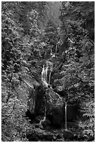 Multi-tiered waterfall in old-growth forest. Mount Rainier National Park ( black and white)