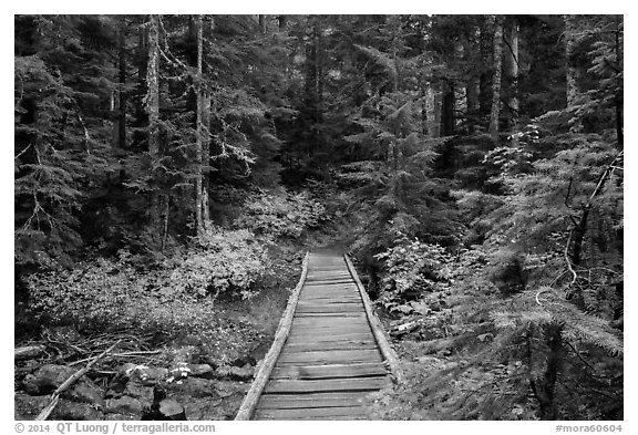 Bridge over Chinook Creek. Mount Rainier National Park (black and white)