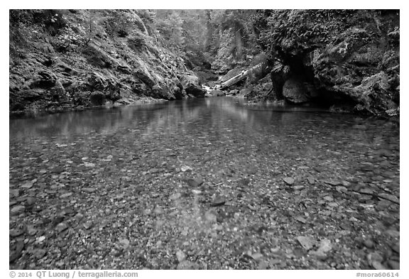 Pebbles in the bed of Panther Creek. Mount Rainier National Park (black and white)