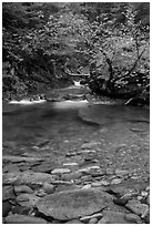 Water flowing in Panther Creek. Mount Rainier National Park ( black and white)