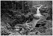 Silver Falls of the Ohanapecosh River. Mount Rainier National Park ( black and white)
