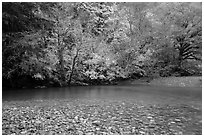 Pebbles, Ohanapecosh River, and autumn foliage. Mount Rainier National Park ( black and white)