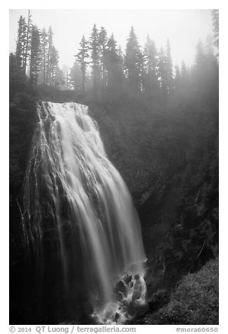 Narada Falls in the fog. Mount Rainier National Park (black and white)