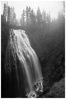 Narada Falls in the fog. Mount Rainier National Park ( black and white)