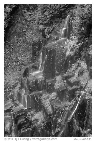 Cascades over columns of basalt, Narada Falls. Mount Rainier National Park (black and white)