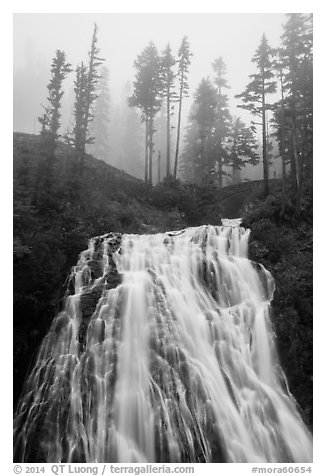 Narada Falls and trees in fog. Mount Rainier National Park (black and white)