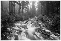 Stream above Narada Falls in fog. Mount Rainier National Park ( black and white)