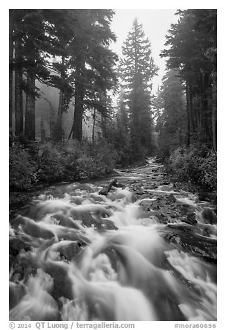 Stream on its way to Narada Falls. Mount Rainier National Park (black and white)