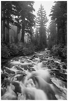 Stream on its way to Narada Falls. Mount Rainier National Park ( black and white)