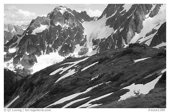 Mule deer and peaks, early summer, North Cascades National Park.  (black and white)