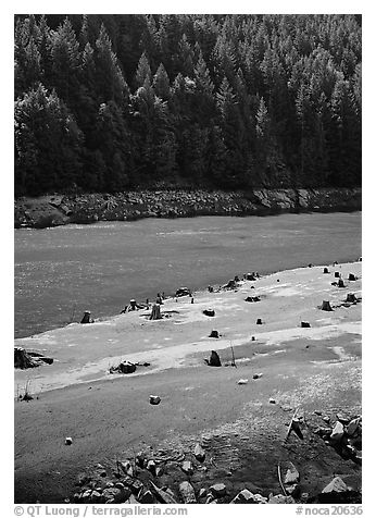 Tree stumps and river. North Cascades National Park (black and white)