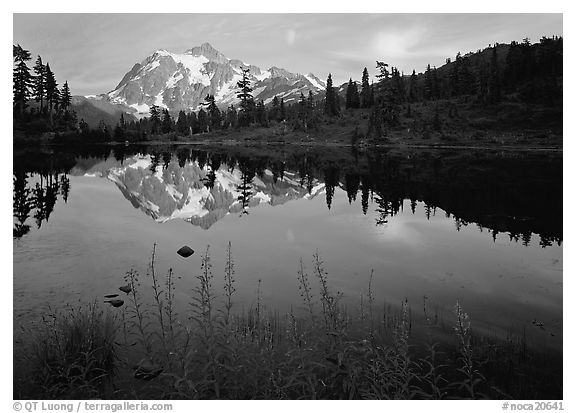 Fireweed, Mount Shuksan reflected in Picture lake, sunset. North Cascades National Park (black and white)