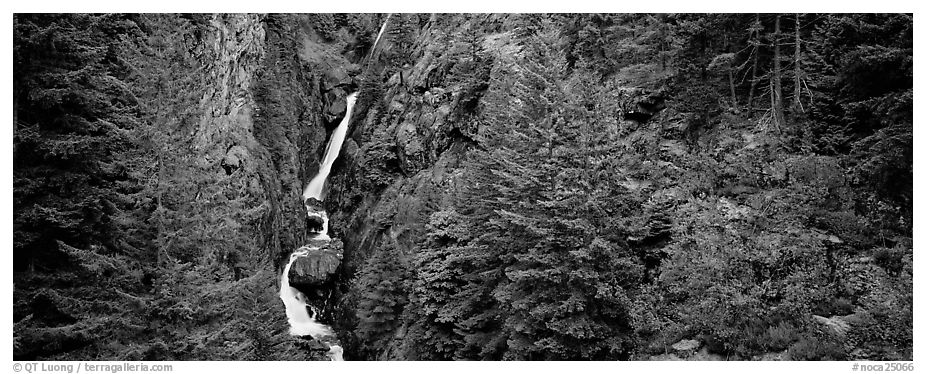 Waterfall in gorge surrounded by forest, North Cascades National Park Service Complex.  (black and white)