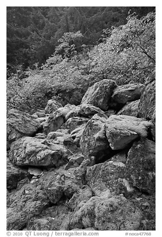 Rocks with green moss, autumn foliage, North Cascades National Park.  (black and white)