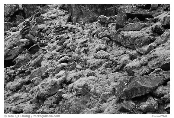 Mossy rocks, North Fork of the Cascade River, North Cascades National Park.  (black and white)