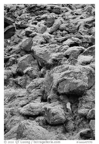 Boulders covered with green moss, North Cascades National Park.  (black and white)