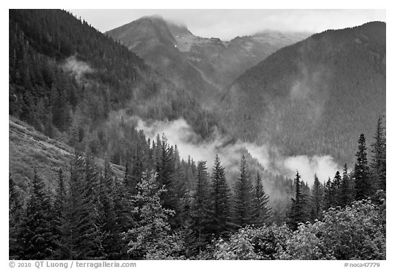 North Fork of the Cascade River Valley, North Cascades National Park.  (black and white)