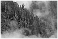 Tree ridge and fog, North Cascades National Park.  ( black and white)