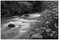 North Fork of the Cascade River in autumn, North Cascades National Park.  ( black and white)