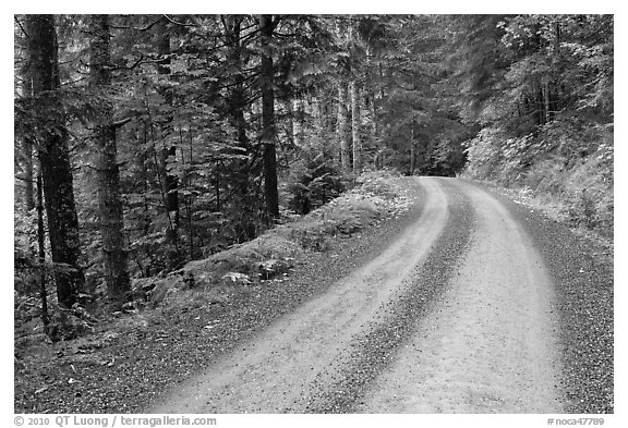 Cascade River Road, North Cascades National Park.  (black and white)