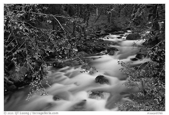 North Fork of the Cascade River from above, North Cascades National Park.  (black and white)