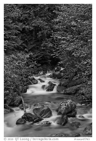 Creek cascading over boulders, Mount Baker Snoqualmie National Forest. Washington (black and white)