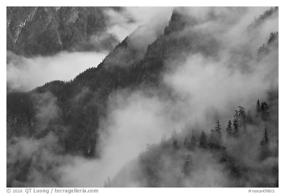 Ridges, trees, and fog, North Cascades National Park.  (black and white)