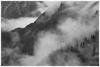 Ridges, trees, and fog, North Cascades National Park.  ( black and white)
