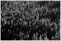 Forest on slope,  North Cascades National Park Service Complex.  ( black and white)