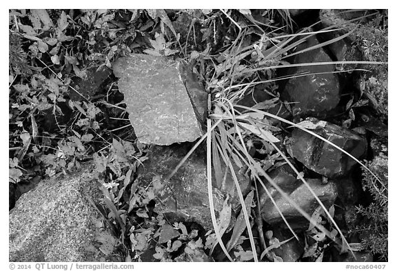 Close-up of blocks of rocks and berry plants, North Cascades National Park Service Complex.  (black and white)